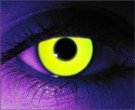 Rave Yellow Contact Lenses - Rave Yellow Contacts by Novelty Mfg