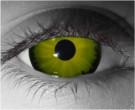 Gorgon Contact Lenses - Gorgon Contacts by Novelty Mfg