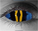 Bahamut Contact Lenses - Bahamut Contacts by Novelty Mfg
