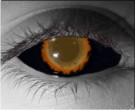 Creeper Contact Lenses - Creeper Contacts by Novelty Mfg