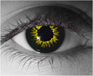 Black Wolf Contact Lenses - Black Wolf Contacts by Novelty Mfg